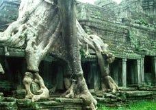 Oude overwoekerde tempel stock foto