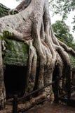 Oude overwoekerde tempel Royalty-vrije Stock Foto's