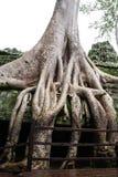 Oude overwoekerde tempel Stock Afbeelding