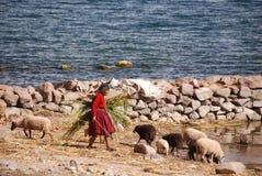 Oude Peruviaanse mensen die op Titicaca-meer leven Stock Fotografie