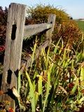 Oude Planken Stock Foto's