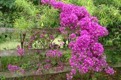 Oude poort met bloemenramada stock foto's
