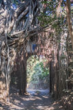 Oude poort in ranthambore Stock Foto's