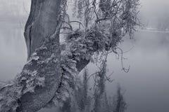Oude riverbankboom royalty-vrije stock afbeeldingen