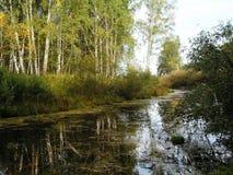 Oude rivier in het hout achter de boszomer Rusland Stock Foto