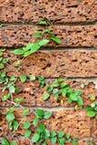 Oude rode baksteen wal Royalty-vrije Stock Fotografie