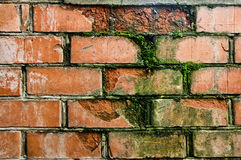 Oude rode bakstenen muur die met mos wordt gekweekt Stock Foto