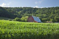 Oude rode schuur dichtbij cornfield onder beboste heuvels op de zonnige zomer Royalty-vrije Stock Afbeeldingen
