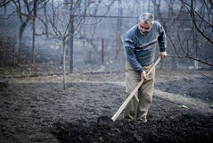 Oude Roemeense mens die zijn land in traditioneel werken Stock Afbeeldingen