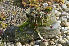 Oude rotte schoen stock afbeeldingen