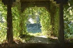 Oude ruïne met klimop Royalty-vrije Stock Afbeeldingen