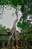 Oude ruïnes van de tempel van Ta Phrom bij het gebied van Ankerwat stock foto