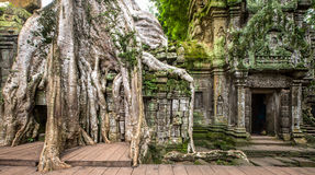Oude ruïnes van Ta Prohm Royalty-vrije Stock Afbeelding