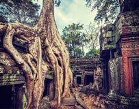 Oude ruïnes en boomwortels, de tempel van Ta Prohm, Angkor, Kambodja Royalty-vrije Stock Foto's