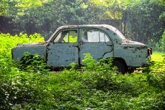 Oude schadeauto in struiken bij ochtend stock fotografie