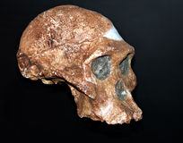 Oude schedel royalty-vrije stock fotografie