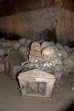Oude schedels Royalty-vrije Stock Fotografie