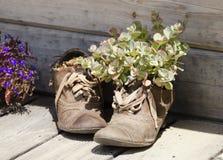 Oude schoenen met succulents stock fotografie