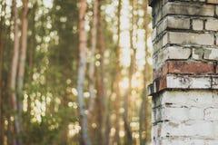 Oude Schoorsteen in het Bos Royalty-vrije Stock Afbeeldingen