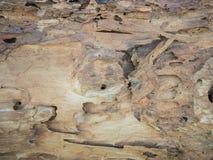 Oude Schors van houten textuur Royalty-vrije Stock Fotografie