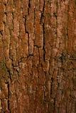 Oude schorshout gebarsten textuur met korstmos Stock Foto