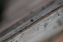Oude schroef in muur Stock Afbeeldingen