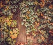 Oude schuur in een verlaten tuin Royalty-vrije Stock Foto's