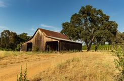 Oude schuur met bomen en wijngaarden in de wijnland van Plymouth Californië royalty-vrije stock afbeeldingen