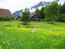 Oude schuur in Zwitserse alpiene weide Stock Foto's