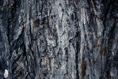Oude schuurmiddel gekleurde schors van pijnboom, bos houten textuur De winter, de herfst, de zomer of de lente, Stock Foto's
