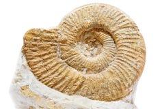 Oude shell op een witte achtergrond Royalty-vrije Stock Fotografie