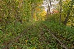 Oude spoorweg door de de herfst bos Beroemde die Tunnel van liefde door bomen wordt gevormd Klevan, Rivnenska obl ukraine stock fotografie