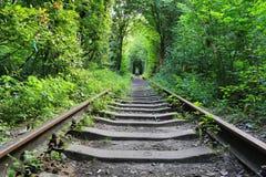 Oude spoorweg in groen bos stock afbeeldingen