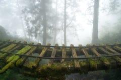 Oude spoorweg in het bos stock foto's