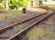 Oude spoorwegspoor en ladingstrein Stock Fotografie