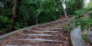 Oude stappen die in de diepten van het bos leiden stock afbeeldingen