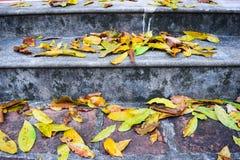 Oude stappen in een bos tijdens de de herfsttijd Royalty-vrije Stock Foto's