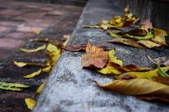 Oude stappen in een bos tijdens de de herfsttijd Stock Fotografie