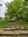 Oude stappen in het groene park royalty-vrije stock afbeeldingen
