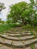 Oude stappen in het groene park stock afbeelding