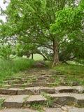 Oude stappen in het groene park royalty-vrije stock fotografie