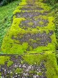 Oude stappen in het mos royalty-vrije stock afbeeldingen