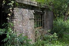 Oude stedelijke muur in een hout Royalty-vrije Stock Foto's