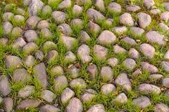 Oude Steen Bedekte Weg met Gras Stock Afbeeldingen
