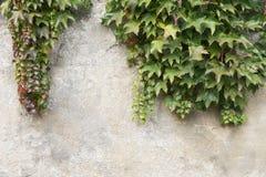 Oude steenmuur en bladeren Stock Afbeelding