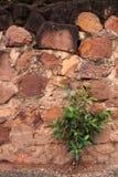 Oude steenmuur en boom Royalty-vrije Stock Foto's