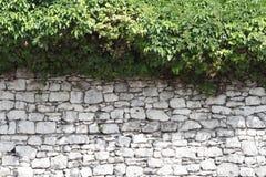 Oude steenomheining en een haag van wild druivenclose-up royalty-vrije stock foto