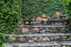 Oude steenstappen met groen het groeien Stock Afbeeldingen