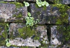 Oude stenen met groen mos Stock Afbeeldingen