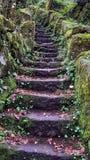 Oude oude stenen met mos stock afbeelding